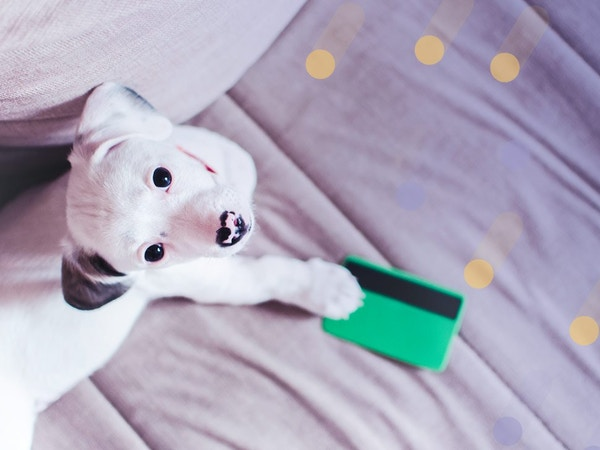 mobile dog groomer, mobile pet grooming