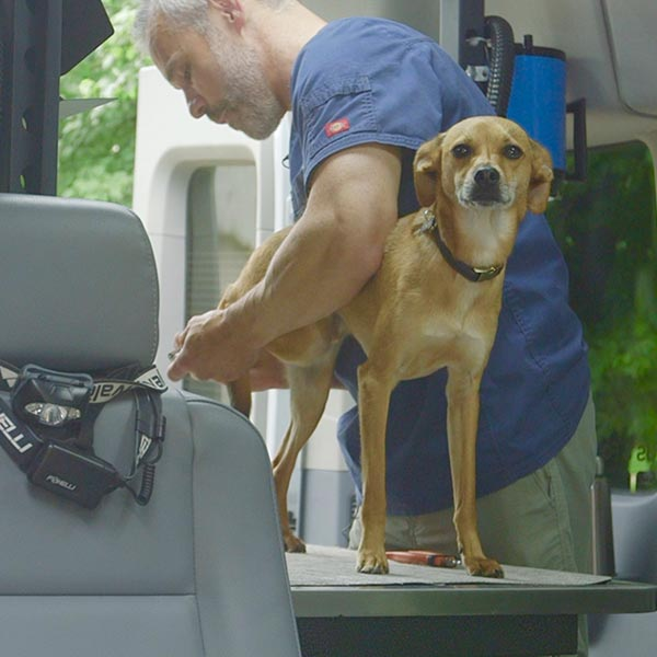 mobile grooming business