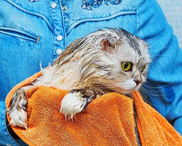 cat grooming bath