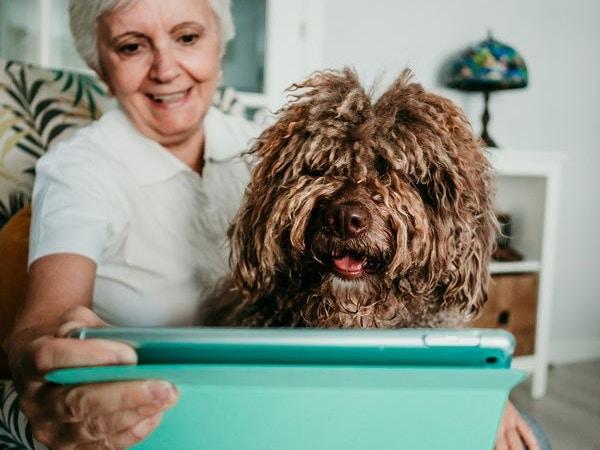 dog grooming reviews