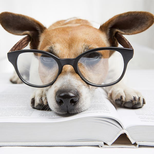 successful pet groomer knowledge