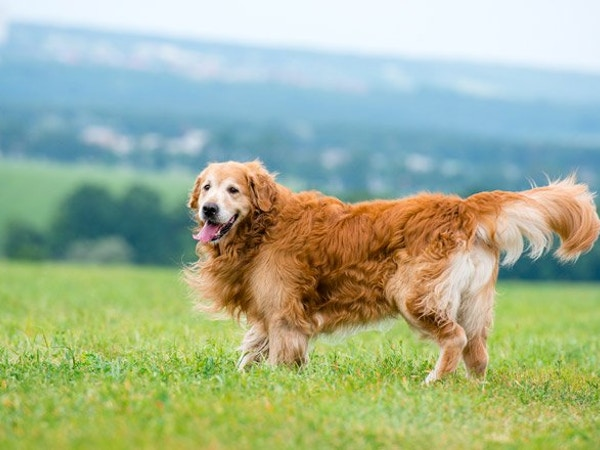natural products for pets