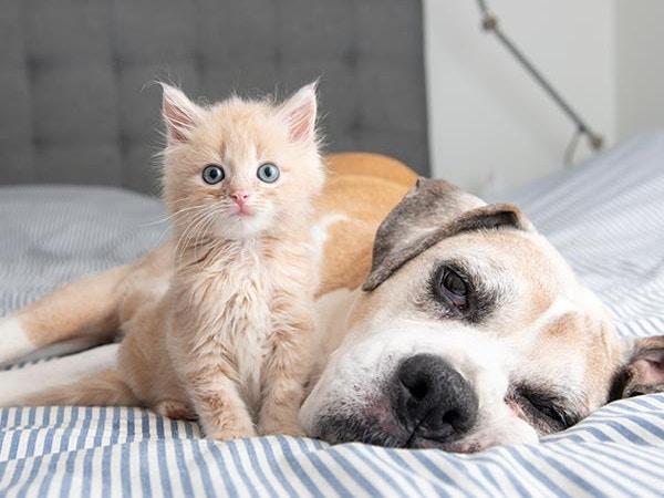 adopting senior dogs