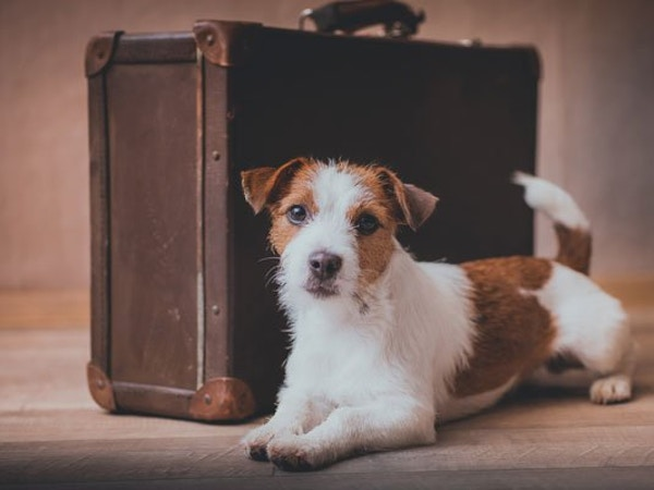 dog boarding requirements