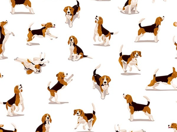 dog temperment test