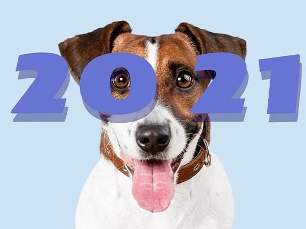 pet industry trends 2021