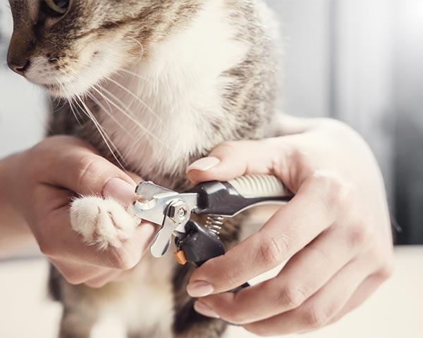 mobile cat grooming