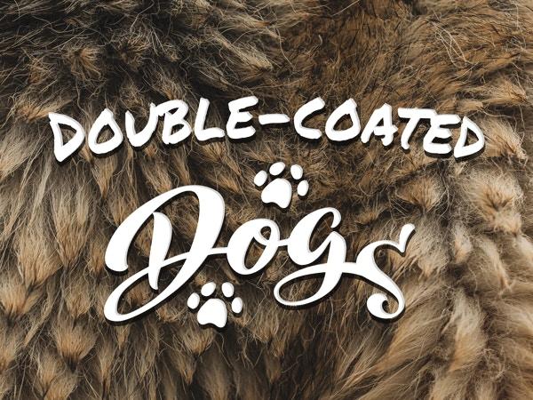 double coat dog breeds