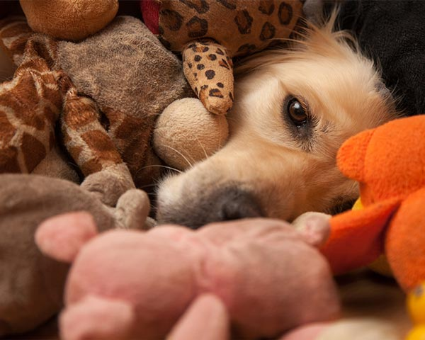 doggy valentine