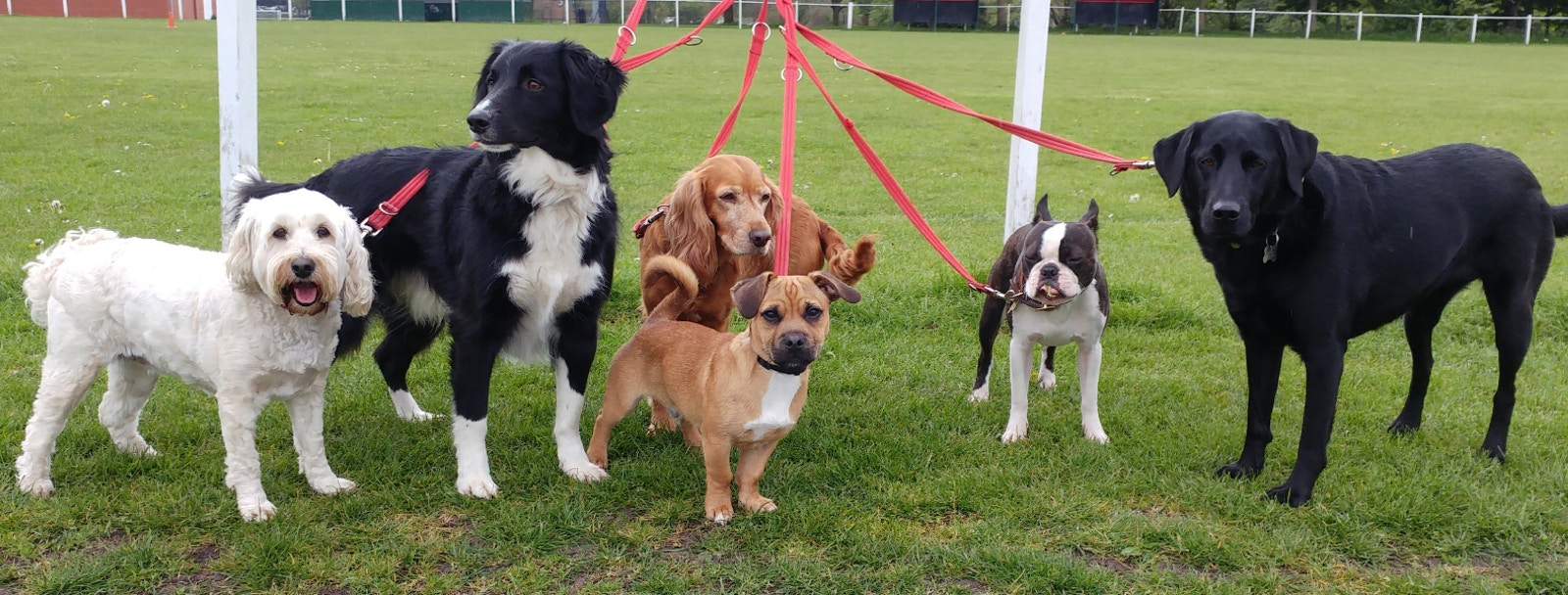 dog daycare header